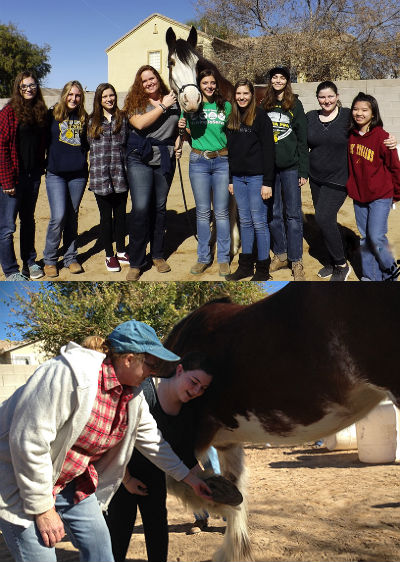 Basha High FFA students visiting the Clydesdale Preservation Foundation