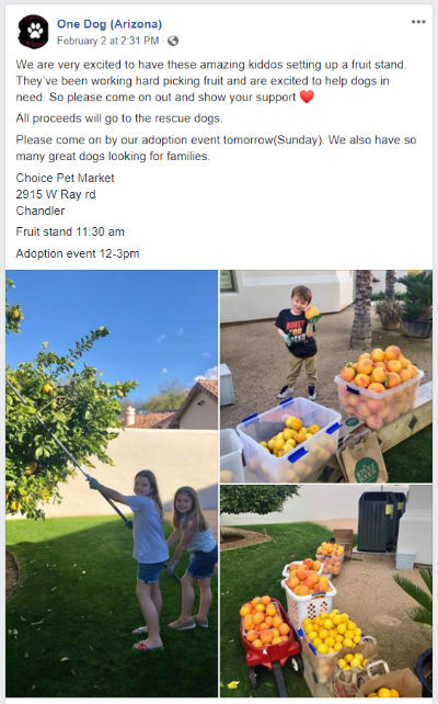 Fruit stand for One Dog Arizona Rescue