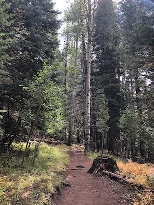 Flagstaff - Kachina Trail 2