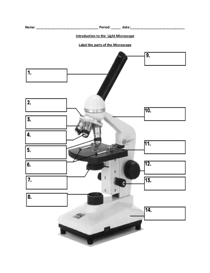 Kaufmann Stephanie Biology Notes PPTs Activities Homework – Microscope Parts and Functions Worksheet